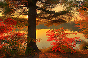 Autumn scenic at Beales Lake<br /> Wharncliffe<br /> Ontario<br /> Canada