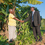 CAPTION: In his garden, Philemon shakes hands with Emilio, Secretary of the Kufandada Beneficiary Committee, to thank him for his hard work on behalf of local farmers. The irrigation scheme will help farmers like Philemon move beyond subsistence farming, as they will be able to produce and sell surplus crops for cash income. LOCATION: Ndimo Village, Bikita District, Masvingo Province, Zimbabwe. INDIVIDUAL(S) PHOTOGRAPHED: Philemon Makaradza (left) and Emilio Jeketera (right).