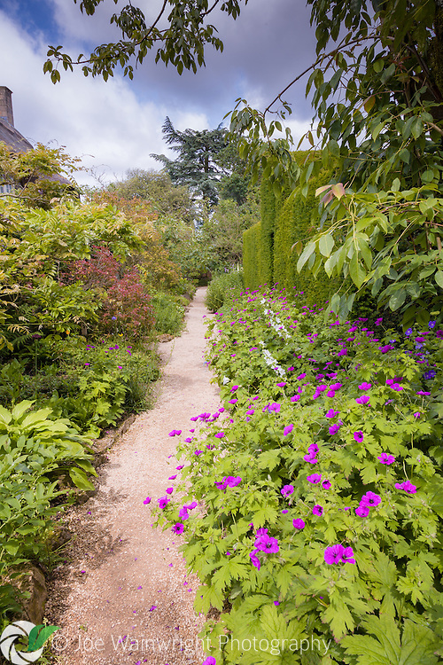 Geraniums line a garden path at Hidcote Manor, Gloucestershire.