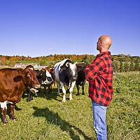 Beretta's organic beef cattle, Ontario Canada.