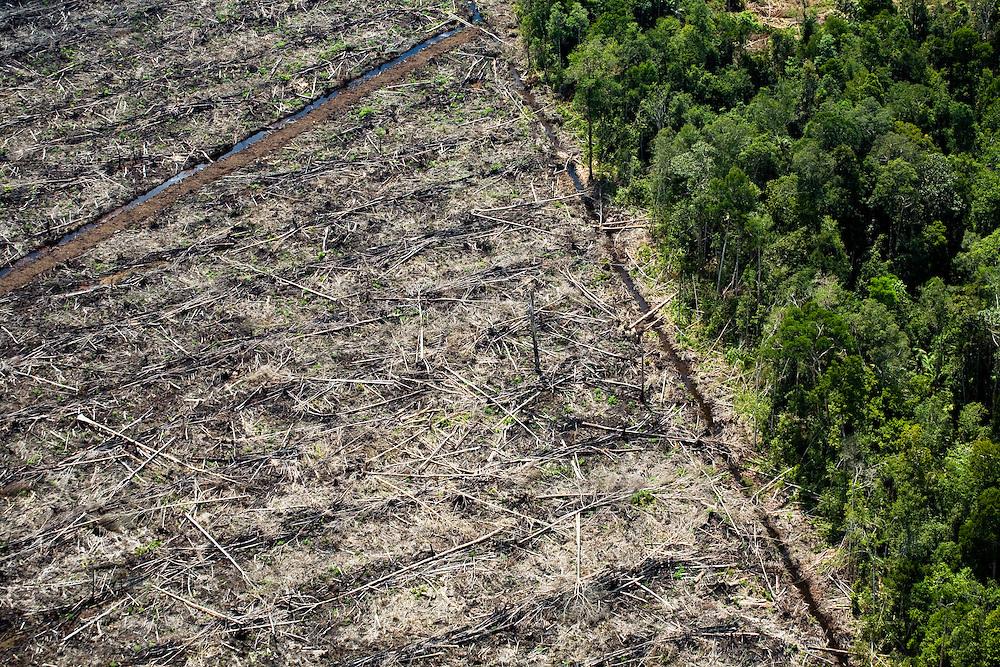 Forest land clearing east of Pekanbaru, Sumatra, Indonesia, Aug. 30, 2008..Daniel Beltra/Greenpeace
