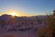 Desert sunrise at Joshua Tree, California, USA.