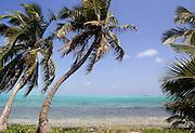 CAYE CAULKER, : March 17, 2006 -- CAYE CAULKER, BELIZE --   in  Caye Caulker, a small island off Belize March 17....Steve McKinley Photo.
