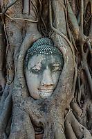 Buddha Head in banyan tree roots Wat Mahatha Ayutthaya Bangkok Thailand