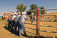 Montana cowboy and horse trainer Doyle Parker shows gelding Quarter Horse to buyers at Leachman Hairpin Cavvy horse sale southeast of Billings Montana