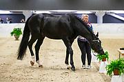 Regina Isachkina - Sun of May Life<br /> FEI World Cup Final Gothenburg 2019<br /> © DigiShots