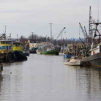 "The Port of Belford is located in the shelter of Sandy Hook on the most northern section of the New Jersey coast. With ready highway access, ocean-fresh seafood harvested by the fishermen based in Belford can be in New York's Fulton market within an hour or to any of tens of millions of consumers in the same day it was caught. Many of the vessels berthed in Belford are owned by members of the Belford Fishermen's Cooperative, one of the most active fishermen's cooperatives on the Atlantic Coast. The fleet is composed of otter trawlers, gill netters, lobster boats and purse seiners. Many of the fishermen there rely on the ""traditional"" Mid-Atlantic mixed trawl fishery, having adjusted their fishing - and marketing - efforts to be in tune with the annual migrations of the silver and red hake, fluke, flounder, seabass and porgies that make up a large part of their harvest."