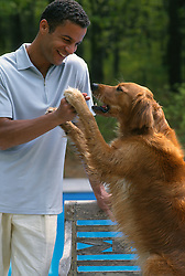 Golden retriever holding on to African American Man's hands
