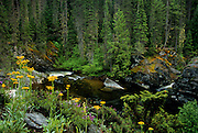 West Fork Yaak River and wildflowers in summer. Kootenai National Forest in the Purcell Mountains, northwest Montana.