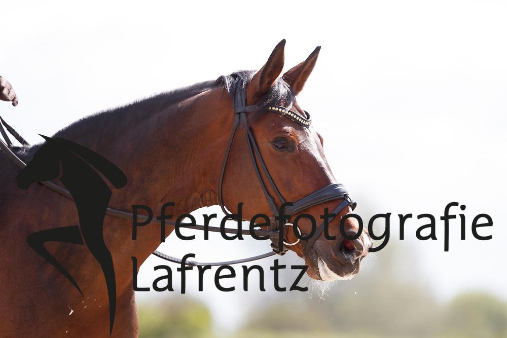 Reynolds, Judy (IRL) Traversalen Reiten<br /> Traversalen richtig vorbereiten<br /> Dorsten - Traversalen Reiten 2017<br /> © Stefan Lafrentz