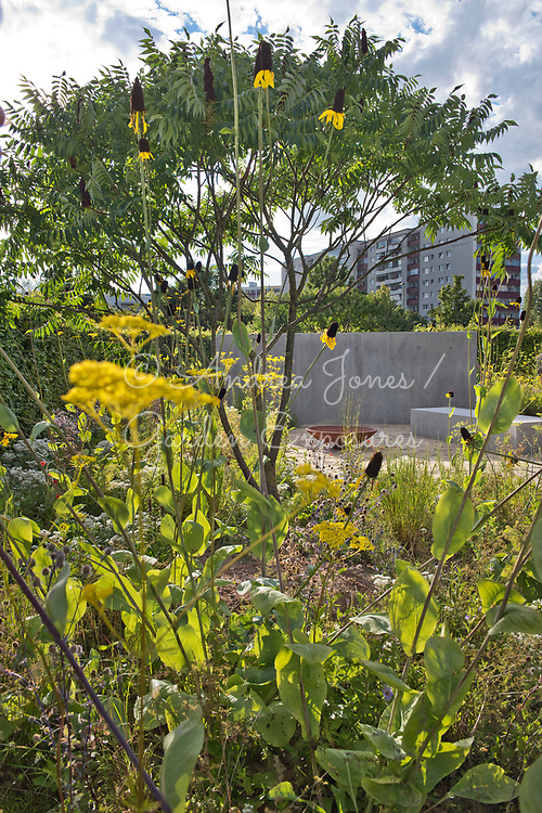 Border in foreground including Rhus typhina (Stag's horn sumach), Rudbeckia maxima (great coneflower), Patrinia scabiosifolia (Golden valerian, Golden lace) and Eryngium planum 'Blaukappe' (sea holly 'Blaukappe'). <br /> <br /> Concrete wall and bed represents a house, rusted iron bowl represents furniture whilst the stone paving is the floor of a previous house.<br /> <br /> IGA Berlin 2017, 'The Garden of Vulcan'<br /> Design: Tom Stuart-Smith Ltd
