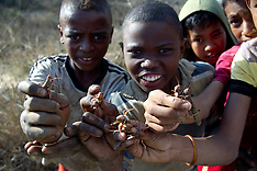 AUG 28 2014 Locusts passes through Antananarivo