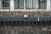 A football stuck in security fencing inside HMP/YOI Portland, a resettlement prison with a capacity for 530 prisoners. Dorset, United Kingdom.