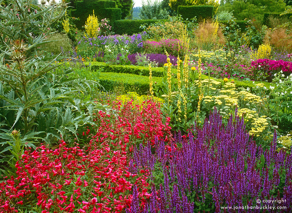 Vibrant colour in the stock beds at Great Dixter. Planting includes Penstemon 'Drinkstone', Salvia x superba, Achillea 'Lucky Break', Verbascum chaixii and Cynara cardunculus. Design: Christopher Lloyd