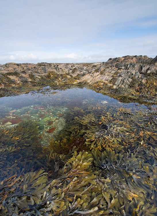 Rock pool reveled at low tide, Tiree, Scotland