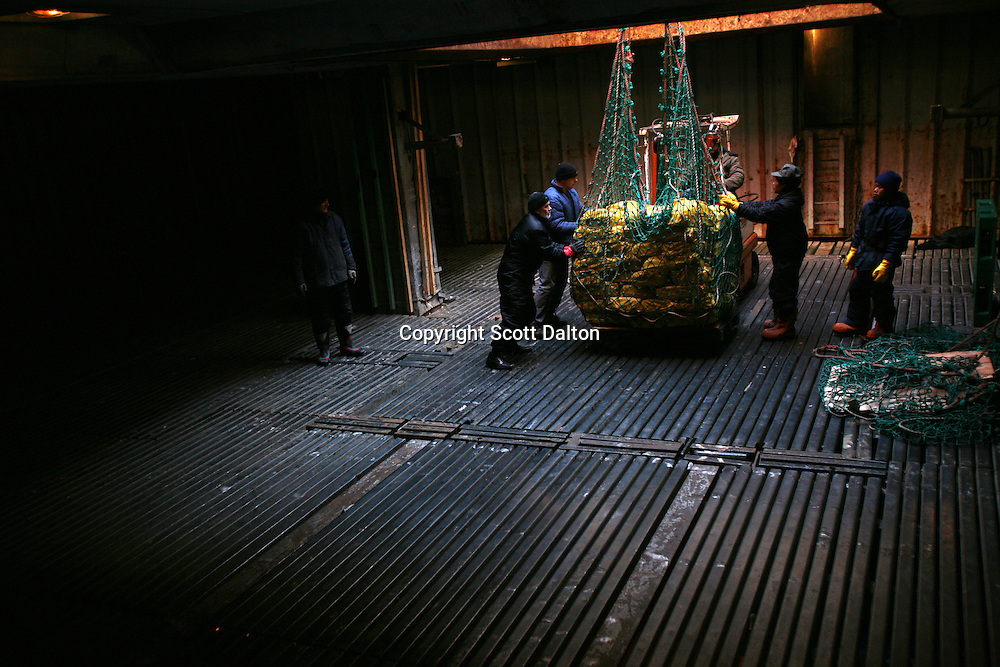 Workers load bags of frozen squid into a cargo ship while at sea off the coast of the Falkland Islands on Tuesday, March 20, 2007. The fishing industry has boomed in recent years, with boats from all over the world fishing the water off the islands. (Photo/Scott Dalton)
