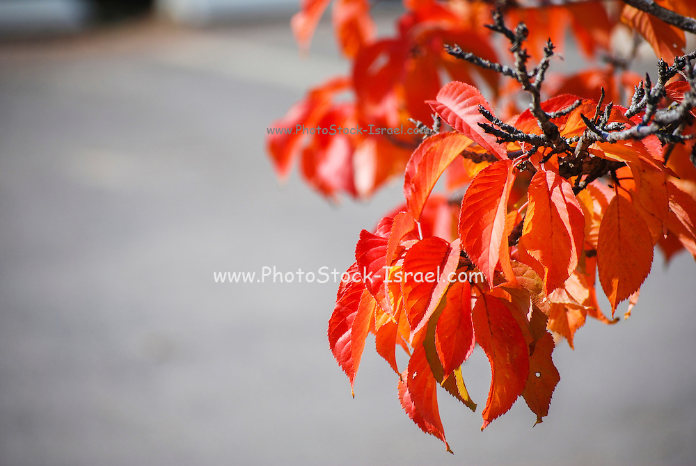 Autumn coloured leaves on a tree