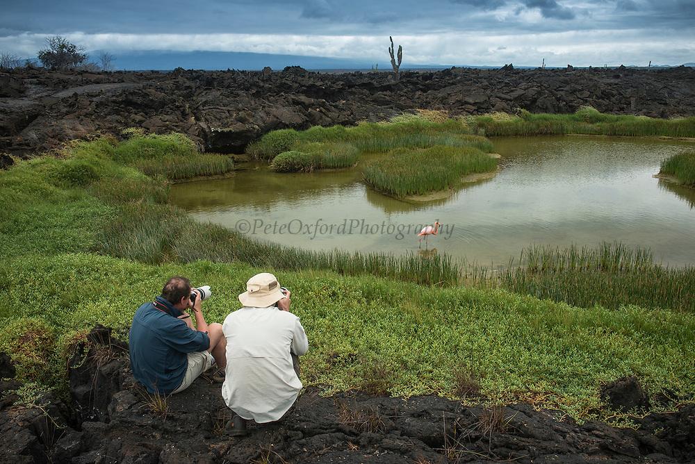 Tourists & Flamingo<br /> Punta Moreno<br /> Isabela Island<br /> GALAPAGOS ISLANDS,<br /> Ecuador, South America