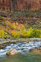 Autumn along the Virgin River, Zion National Park Utah USA