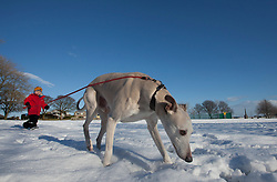 ©Paul Thompson Licensed to London News Pictures. 01/02/2015. Bradford West Yorkshire, UK. Nicholas Tidswell-Thompson (4) dog walking in the snow in Denholme, West Yorkshire. Photo credit : Paul Thompson/LNP