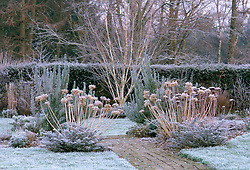 Helen Yemm's garden, Ketley's, in winter. Structure provided by agapanthus seed heads, rosemary and silver birch - Betula utilis var. jacquemontii