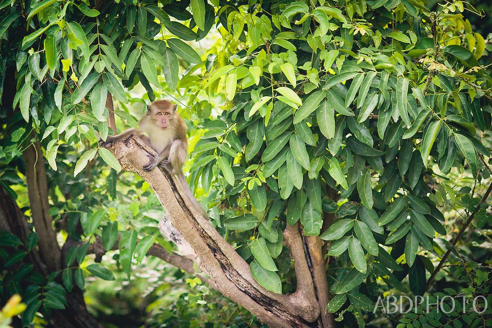 koh lanta monkey boat villa thailand