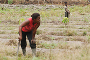 Alain Kouadio Kona, 10, who doesn't go to school, works in a field with his older sister outside the village of Golikro, Bas-Sassandra region, Cote d'Ivoire on Monday March 5, 2012.