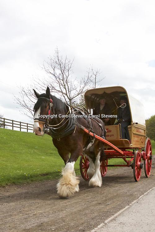 Beamish Museum <br /> Horses at Work 2017