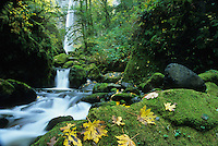 McCord Creek cascades through mossy rocks in the Columbia River Gorge, Oregon.