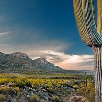 Catalina State Park, Tucson AZ 2010