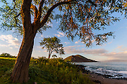 A large kiawe (Prosopis pallida) tree frames of the southwestern coast of the Hawaiian island of Maui near the town of Makena. The first kiawe tree was introduced to Hawaii in 1828 and is now one of the most common trees in the dry lowlands of the Hawaiian islands. The prominent hill visible just to the right of the center of this image if Pu`u Ola`i, a 320-foot (98-meter) cinder cone formed when molten lava erupted from a volcanic vent and fell back to earth forming a nearly perfect cone. Pu`u Ola`i is also known as Earthquake Hill, Red Hill, and Round Mountain.
