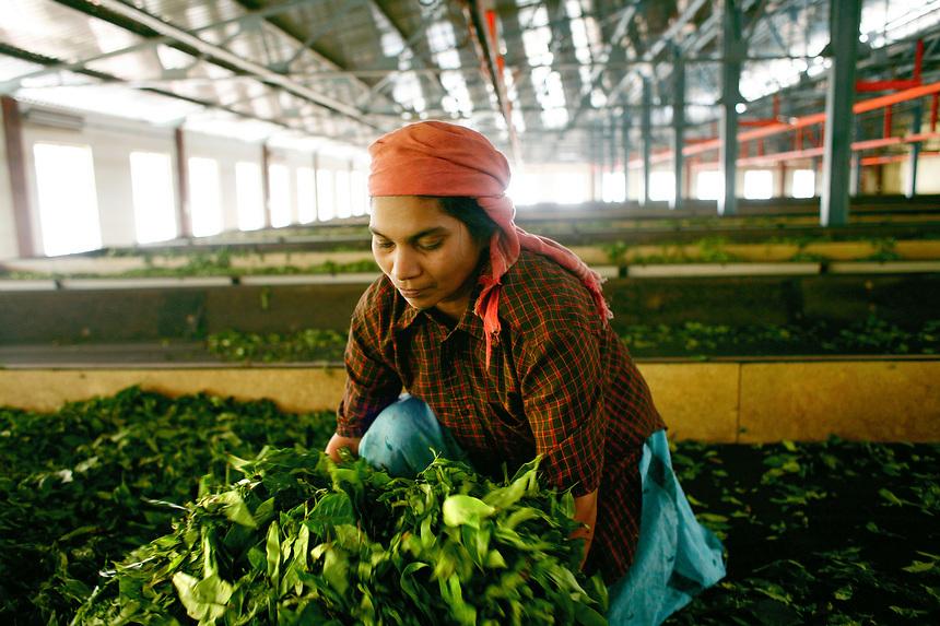 Peermade Development Society's Organic Tea and Spice Factories