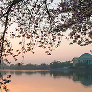 Just before sunrise the sky turns a pale orange. At right is the Jefferson Memorial reflected on the still waters of the Tidal Basin. At top are the cherry blossom flowers. The Yoshino Cherry Blossom trees lining the Tidal Basin in Washington DC bloom each early spring. Some of the original trees from the original planting 100 years ago (in 2012) are still alive and flowering. Because of heatwave conditions extending across much of the North American continent and an unusually warm winter in the Washington DC region, the 2012 peak bloom came earlier than usual.
