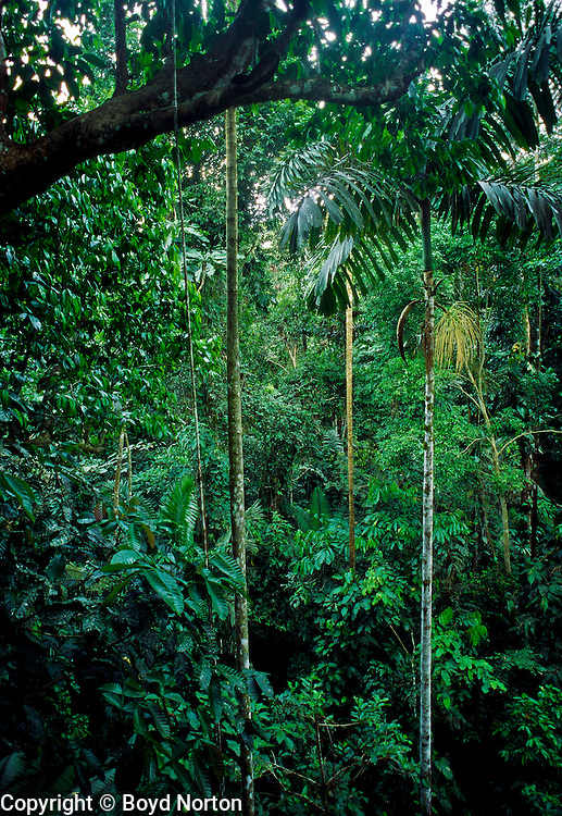 Rainforest, Rio Napo River region, Amazon Basin, Ecuador.