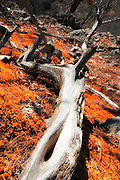 Drift wood on top of mountain