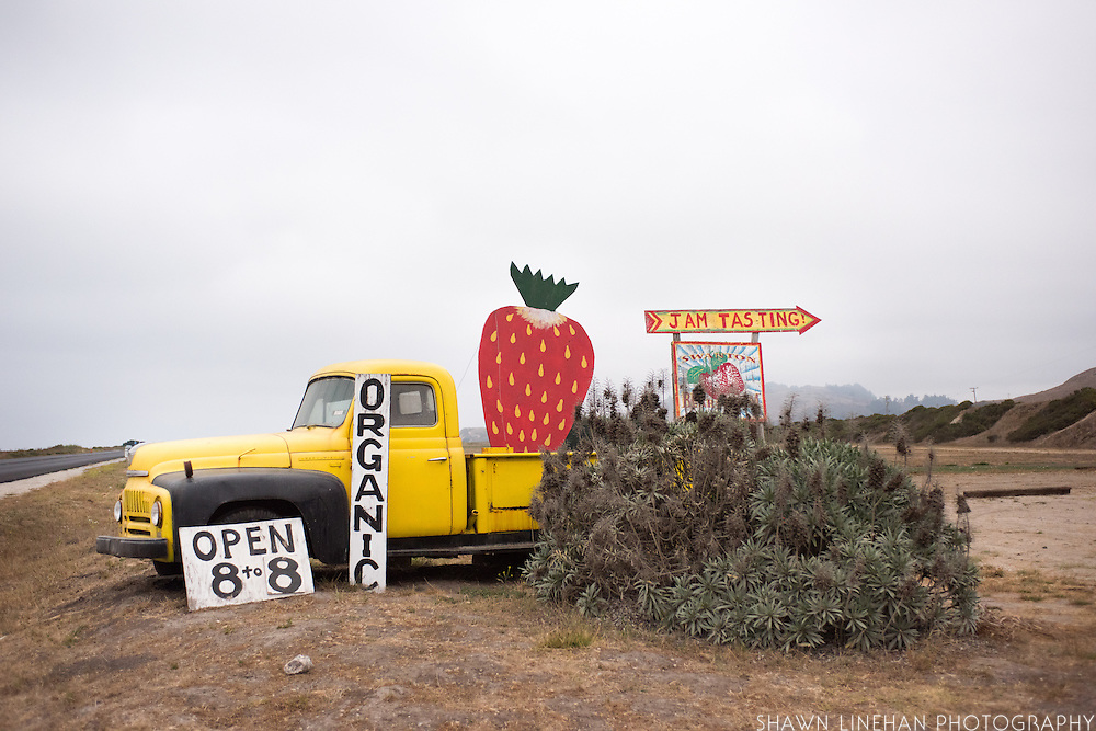 Swanton Berry Strawberry Farm outside Santa Cruz, CA