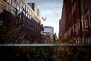 A bird takes flight off a street lamp next to the High Line Park, New York.