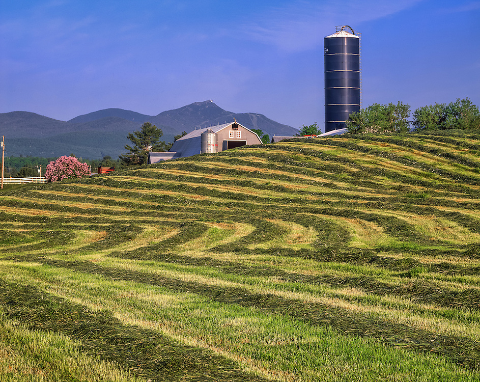 Jay Peak overlooks farm, lilacs, & windrows of fresh cut hay, Newport, VT
