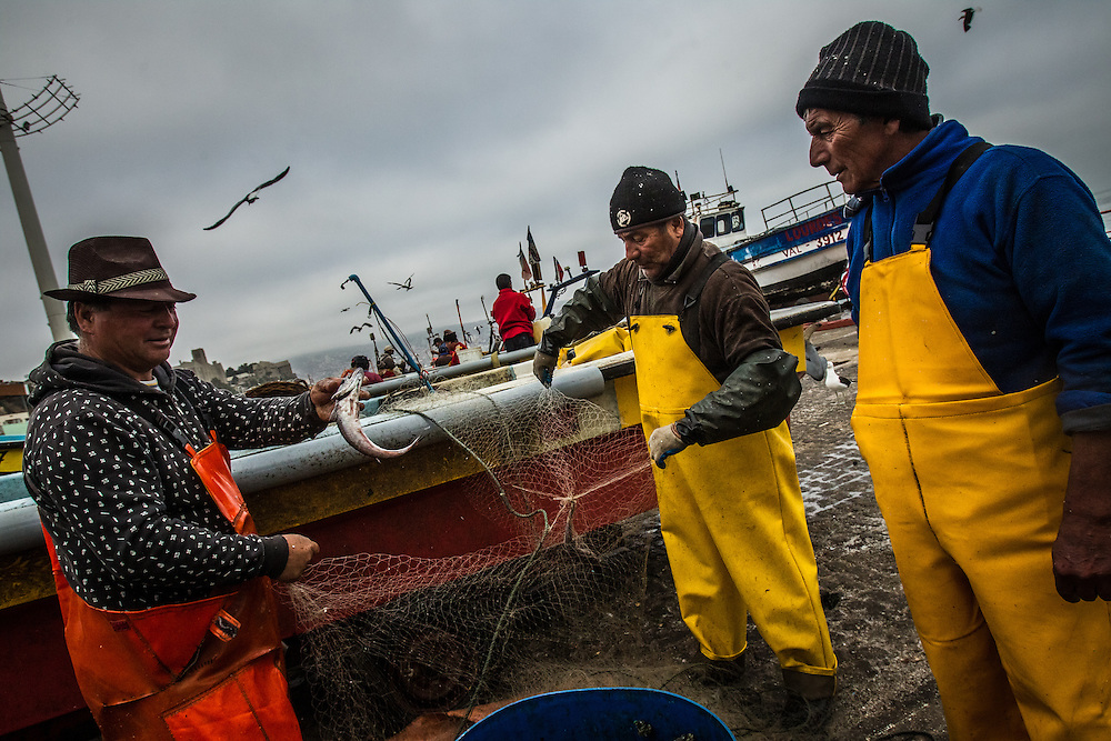 VALPARAISO, CHILE - MARCH 17, 2014: Artisanal fishers remove hake fish from their nets at the port in Valparaiso, Chile.  PHOTO: Meridith Kohut for The World Wildlife Fund