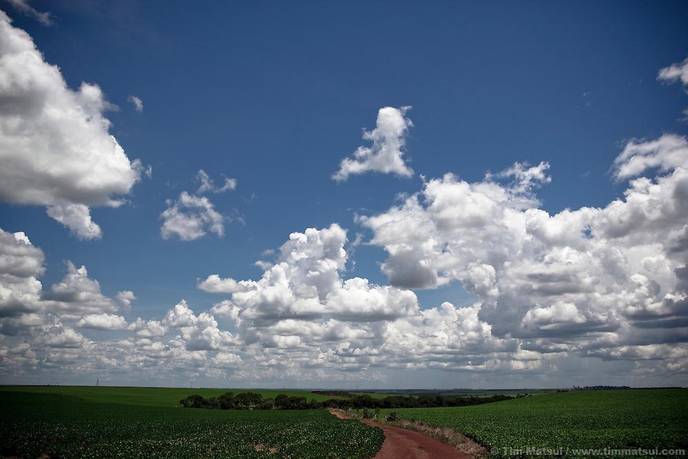 An open landscape of soybean fields near Brasilia, Brazil.