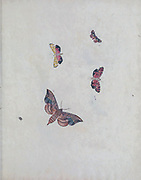 Psyche : Figures of non-descript lepidopterous insects, or rare moths and butterflies from different parts of the world by Martyn, Thomas, active 1760-1816; printed by Cooper and Graham, printer in London in 1797
