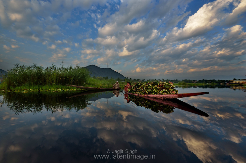The houseboat and Shikara communities have lived for centuries on the Dal Lake, Srinagar, India. People use Shikara to commute and for other routine activities.