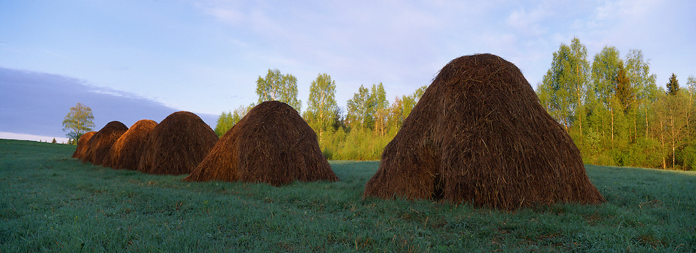 Haystacks at dawn, Latvia