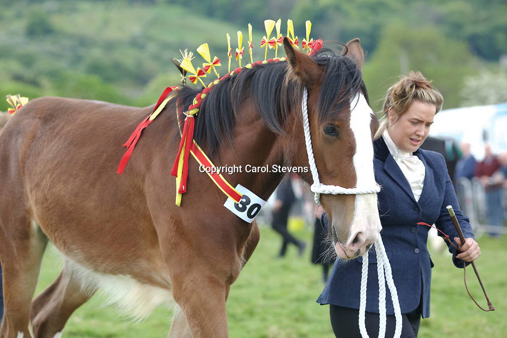 John Cross' Yearling Filly CROSSINGTONS OPHELIA <br /> Sire  Metheringham Upton Hamlet<br /> Winner  Yearling, Colt or Filly<br /> Reserve Junior Champion
