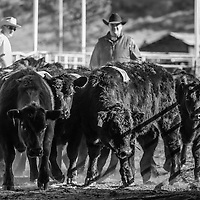 Big Sky Ranch Sorting - March 2016