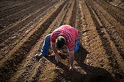 FABENS, TX - APRIL 9, 2015:  Farmer Bobby Scov checks the depth a cotton planter is seeding on his farm. Scov farms 1500 acres of cotton, pecans and onions on the US-Mexico border. He has to rely exclusively on groundwater until he receives his surface water allotment in June. CREDIT: Max Whittaker for The New York Times