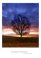 &quot;Friendship is a sheltering tree.&quot;<br /> Samuel Coleridge
