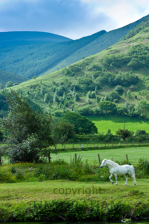 Welsh pony in typical Welsh mountain landscape in Snowdonia, Gwynedd, Wales