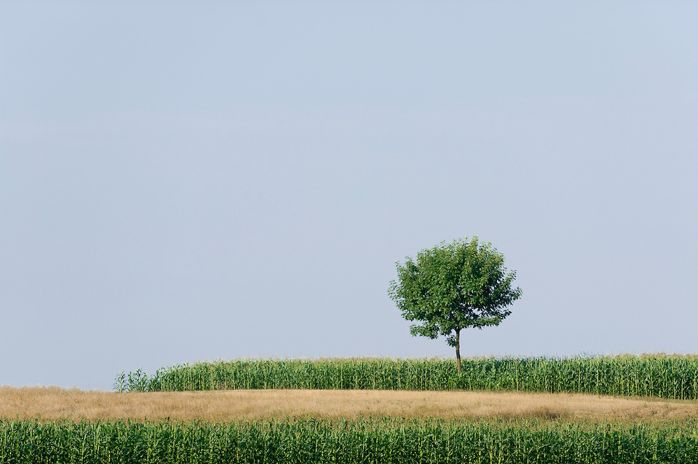 Lonely tree on the infnitive prairie of Hortobagy National Park, Hungary