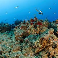נופים תת ימיים